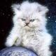 Аватар пользователя Fatpolarfox