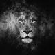 Аватар пользователя lionrider