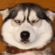 Аватар пользователя Fudzi87