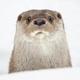 Аватар пользователя MARMOTINA