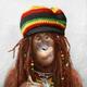 Аватар пользователя sparrowfree