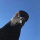 Аватар пользователя sneg177