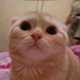 Аватар пользователя stout73rus