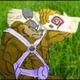 Аватар пользователя Budoka