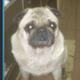 Аватар пользователя Speedometr