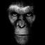 Monkey74