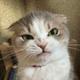 Аватар пользователя Kotoedov