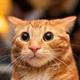Аватар пользователя Penchikryakov