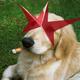 Аватар пользователя ShustAru