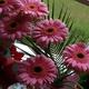 Аватар пользователя sakura1225