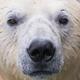 Аватар пользователя Dinael