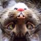 Аватар пользователя lenaelenina