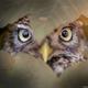 Аватар пользователя OKOSGLAZA
