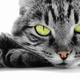Аватар пользователя hendalph