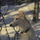 Аватар пользователя Diana.windhound