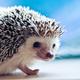 Аватар пользователя SilentHedgehog