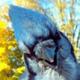 Аватар пользователя Ekalo