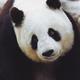 Аватар пользователя Vikki2018cher