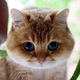 Аватар пользователя galiyami