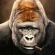 Аватар пользователя Kokorev