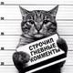 Аватар пользователя kitikot