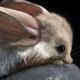 Аватар пользователя Tushkan4ik4ik