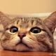 Аватар пользователя MikeGold