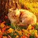 Аватар пользователя koldunjka777