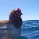 Аватар пользователя SeaChicken