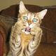 Аватар пользователя klimsamgin1