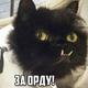 Аватар пользователя MayBeGG