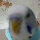 Аватар пользователя Shantaram999