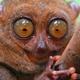 Аватар пользователя Popilopa