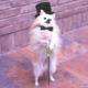 Аватар пользователя ZeG91011