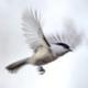 Аватар пользователя Inika8