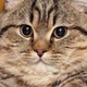 Аватар пользователя Etozhedanya