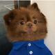 Аватар пользователя kamillacamilla