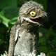 Аватар пользователя pikartbu