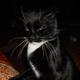 Аватар пользователя KAERmorhen325