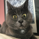 Аватар пользователя Numida