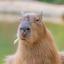 CapybaraChan