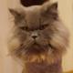 Аватар пользователя Prozharkin