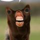 Аватар пользователя ryabokop