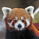 Аватар пользователя ThereHereBerk