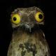 Аватар пользователя PodLabutenom