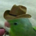 ArizonaRanger