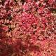 Аватар пользователя Sonnenblumen