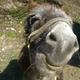 Аватар пользователя godofdonkeys