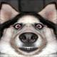 Аватар пользователя akmT