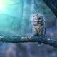 Аватар пользователя Nakhodka